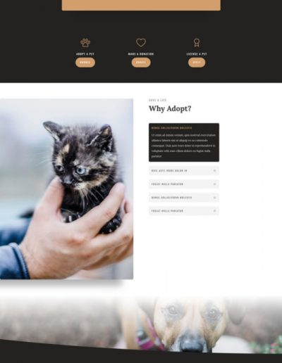 animal-shelter-about-page-533x1506